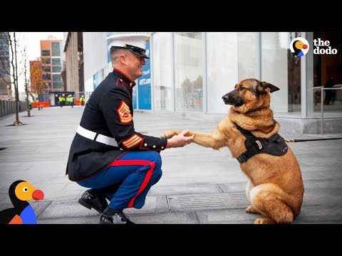 Heartwarming! Soldiers Being Reunited with Their Dogs