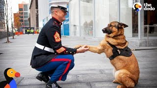 Nonton Soldiers Come Home To Dogs Compilation & More | The Dodo Best Of Film Subtitle Indonesia Streaming Movie Download