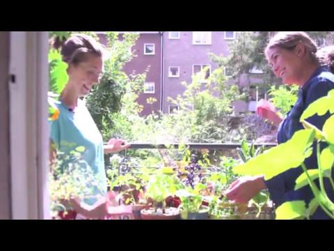 Grow your own Sweden - odla med Auro på balkong och i trädgård (видео)
