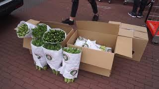 Honderdvijftig bossen tulpen voor zorgcentrum de Haven in Bunschoten