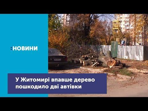 У Житомирі впавше дерево пошкодило дві автівки