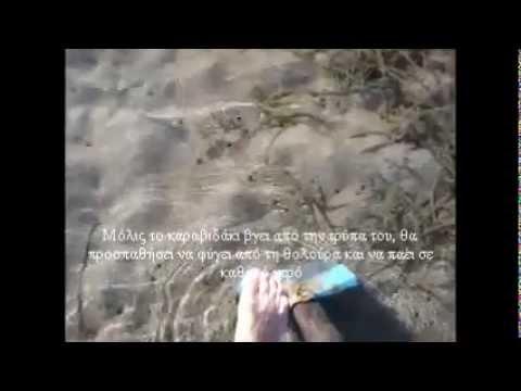 Ψάρεμα-Καραβιδάκι για δόλωμα-Yabbies/Ghost shrimp-fishing bait