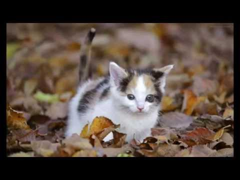 Leash Training Your Cat – How to Teach Your Kitty; Cat Eye Health, Cat Health Tips