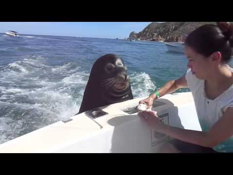 Video - Feeding the Sea Lions