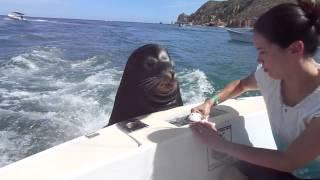 Video Feeding the sea lions! MP3, 3GP, MP4, WEBM, AVI, FLV Januari 2018
