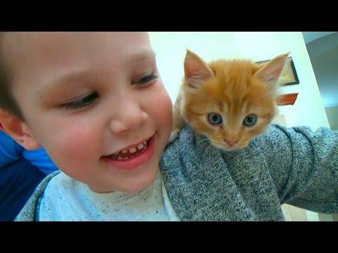 Кошечка Мурка покупаем питомца Максу и Кате ВЛОГ на рынке животных (видео)