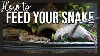 HOW TO FEED YOUR SNAKE by Jossers Jungle