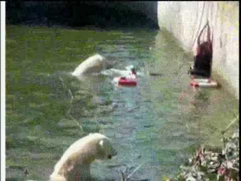 Mujer casi es devorada por osos polares
