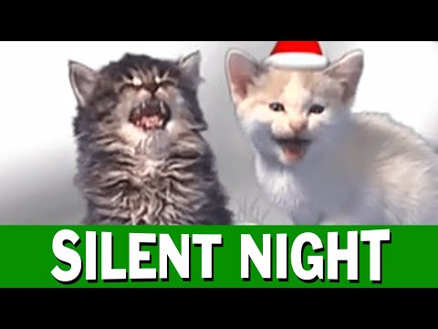 Jingle Cats - Silent Night