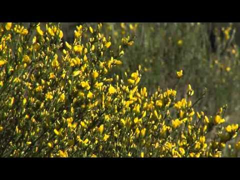 The Great M�laga Path. Video Summary
