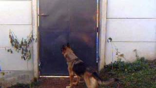 Cachorro pulando muro