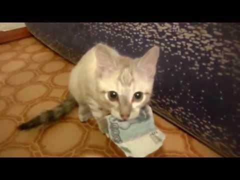 gatto si rifiuta di restituire i soldi!