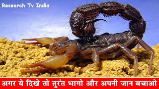 Video दुनिया के सबसे जहरीले बिच्छू| Most Poisonous and Dangerous Scorpion in the World|Scorpions|Rahasya MP3, 3GP, MP4, WEBM, AVI, FLV Maret 2018