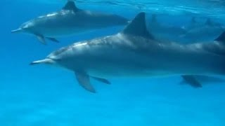 Nonton Denean Open Awareness Dolphins In Sataya Bay Film Subtitle Indonesia Streaming Movie Download