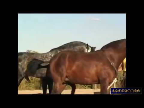 Video Horse mating - Animals mating and human - Horse mating 2015 Horse breeding download in MP3, 3GP, MP4, WEBM, AVI, FLV January 2017