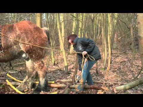 Forest Management - Bosbeheer in Bonheiden