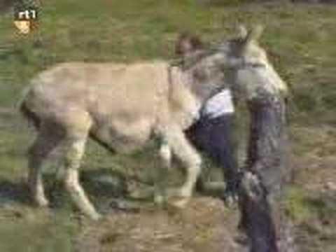 Bad Donkey