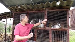 Video povídání u  králiků 2017 MP3, 3GP, MP4, WEBM, AVI, FLV Desember 2018