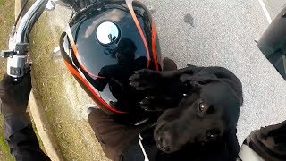 Video BIKERS ARE NICE | Bikers Helping People & Animals | Compilation 2017 [Ep.#10] MP3, 3GP, MP4, WEBM, AVI, FLV Juli 2019