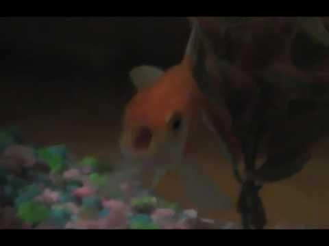 A Fish Raps [Watch]