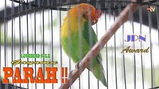 Video Lovebird Sule Ngekek Sampai Nyaris Putus Lehernya, Jawara Kelas Utama JPN Award 2018 MP3, 3GP, MP4, WEBM, AVI, FLV Maret 2018