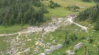 Video Grizzly Bear vs Hikers in Glacier National Park MP3, 3GP, MP4, WEBM, AVI, FLV September 2017