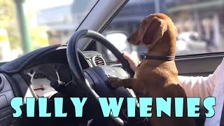 Nonton Silly Wiener Dogs Compilation   Cute And Funny Dachshund Videos Film Subtitle Indonesia Streaming Movie Download