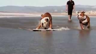 Кучета обичащи екстремни спортове - Уникално!!!