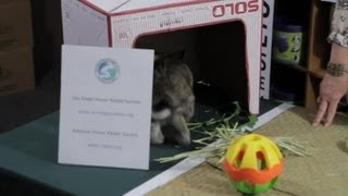 Rabbit Care&Sharing a Bedroom : Rabbit Care Tips