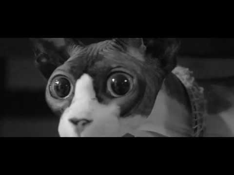 Cat-sitting a weird hairless sphynx space-cat for 3 days, so I made a 50's Scifi themed video of him