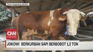 Video Ini Sapi Kurban Presiden Jokowi, Berbobot 1,2 Ton Seharga Rp 90 Juta MP3, 3GP, MP4, WEBM, AVI, FLV Agustus 2019