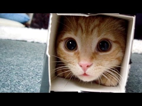 Crazy & Funny ANIMAL videos - LAUGH and ENTERTAINMENT for EVERYONE