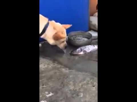 Con chó có  tấm lòng