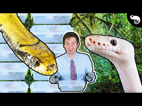 How Should We House Snakes? A Response To Brian Barczyk + False Water Cobra Update