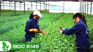 Nông nghiệp | Đưa nông nghiệp 4.0 đến gần hơn với bà con nông dân