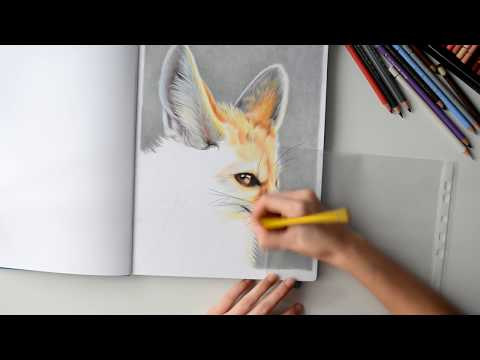 || Speed Drawing - Fennec Fox || Rysunek lisa pustynnego - fenka || HD