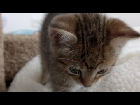 Kitten Close Up 2017-08-09 - Thời lượng: 17:24.