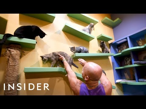 California Home Customized With Playgrounds For 24 Rescue Cats