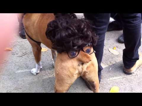 Déguisement d'Halloween pour chien - iSheep.fr
