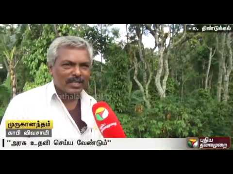 Farmers-growing-coffee-complain-about-lack-of-labour-to-carry-out-their-work