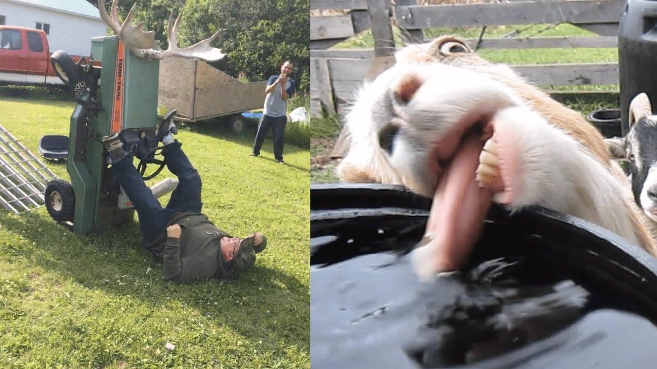 Meanwhile back on the farm: Farm Fails