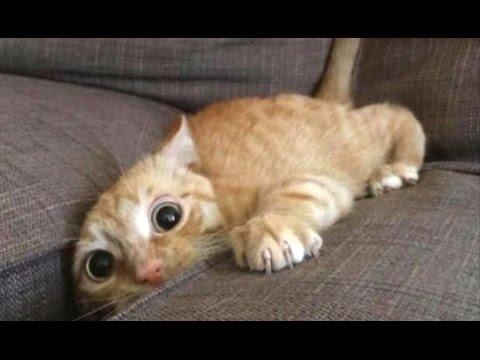 Top 10 Funny Cat Videos - Funny Cats 2017 (видео)