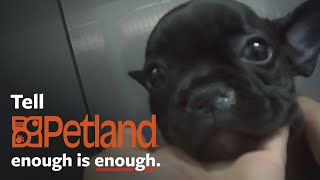 Shocking undercover investigation at Petland! by The Humane Society of the United States
