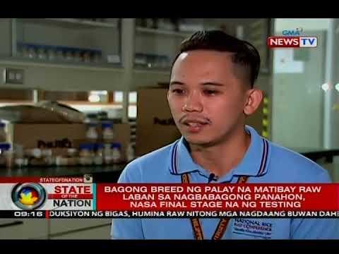 Bagong breed ng palay na matibay raw laban sa nagbabagong panahon, nasa final stage na ng testing_Spacecraft videos