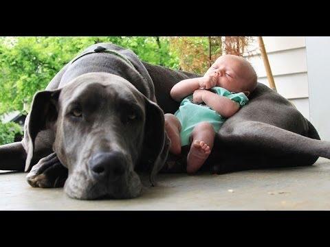 cani grandi che giocano con neonati