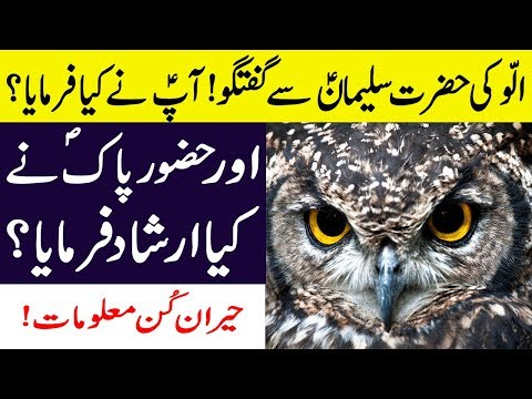 Ullu Ki Hazrat Suleman A.s Se Mulaqat || Aap S.a.w Ne Kya Farmaya? Facts About Owls In Hindi/urdu