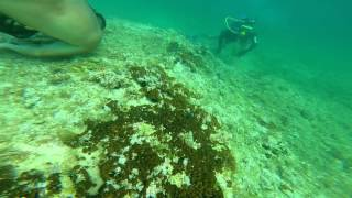 Monopoli Italy  city pictures gallery : [GoPro] Diving Monopoli, Italy