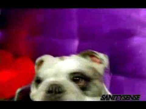Funny Commercial - NCDL (Dog Care)