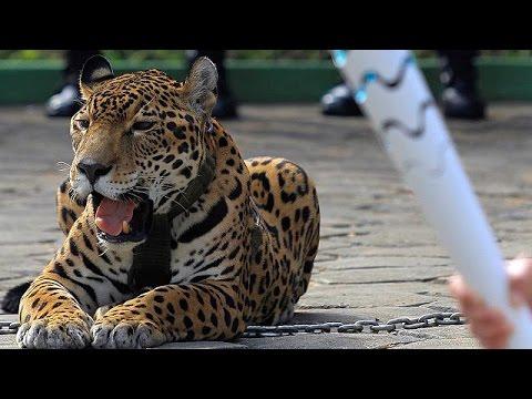 Ρίο 2016: Θανάτωσαν τζάγκουαρ σε τελετή για την ολυμπιακή φλόγα