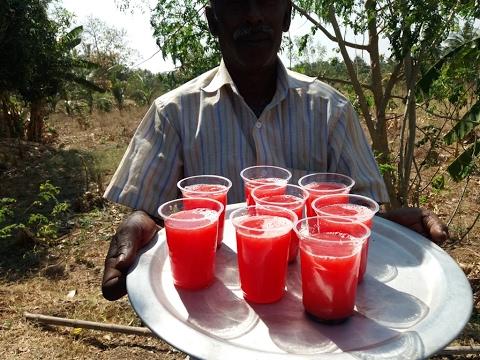 Preparing Fresh Watermelon Juice in My Village - Food Money Food